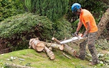 additional services offered by Aberystwyth tree surgeons