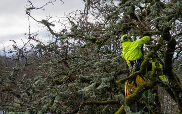 experienced Aberystwyth arborists are needed